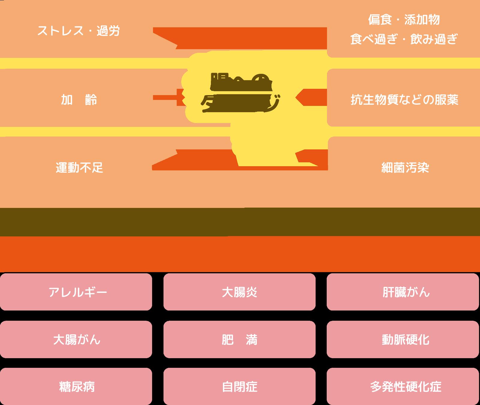 腸へのダメージ(ストレス・過労/加齢/)